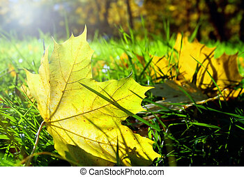 autum leaves in grass