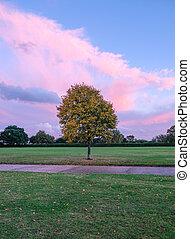 Autum tree in the park