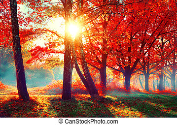 autumn., 秋天, 自然, scene., 美麗, 秋天, 公園