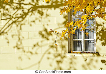 Autumn. A branch of maple with yellow leaves against a white window in the building of yellow color.