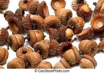 Autumn acorns from oak on white background