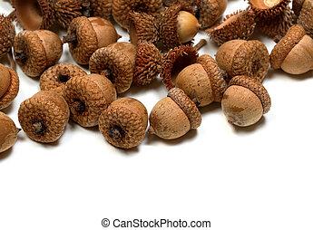 Autumn acorns on white background