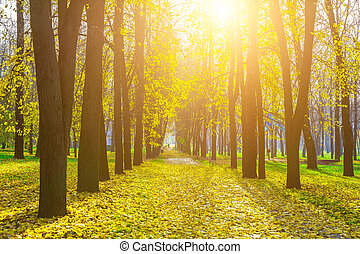 Autumn Alley of Trees with Yellow Leaves