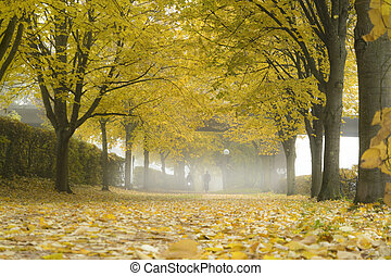 Autumn alley with fallen leaves and mist. Fog in autumn park.