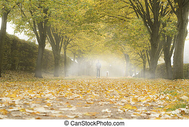 Autumn alley with fallen leaves and mist. Fog in autumn...