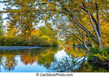 Reflection of trees in a river in the fall
