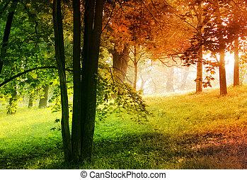 autumn and summer