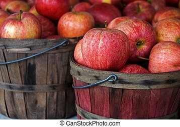 Autumn apples in wooden bushel baskets.