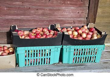 autumn apples box in farm