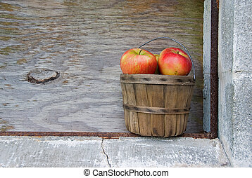 autumn apples in basket - Apples in an old bushel basket.