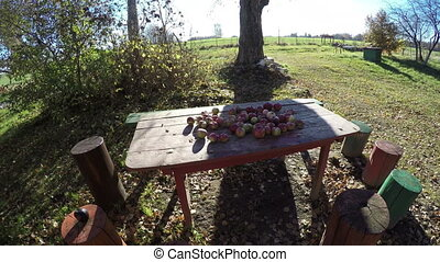 autumn apples on garden table in farm and tree shadow. Time lapse 4K