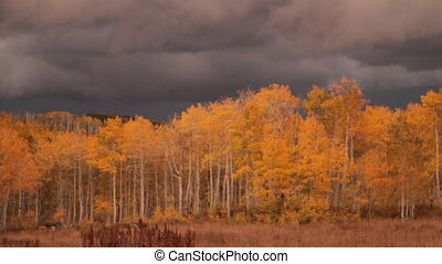 autumn aspen grove at sunset with stormy skies and lightning