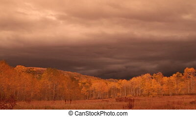 autumn aspen grove at sunset with stormy skies