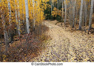 Autumn Aspen Path