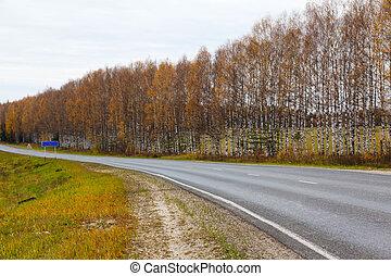 Autumn asphalt road