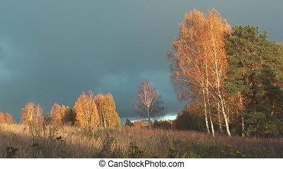 Autumn. - Autumn landscape with birch trees.