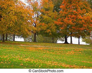 Autumn - autumn trees, open field