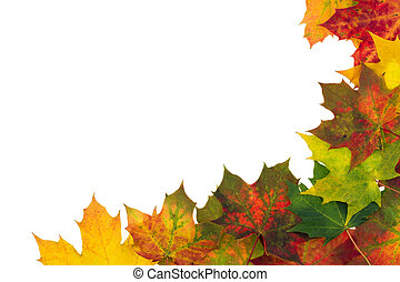 Autumn backdrop - frame composed of colorful autumn leaves over white