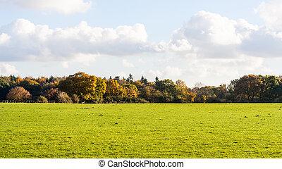autumn backdrop