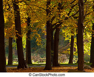 Trees with coloured leaves and picnic tables in the distance