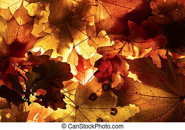 Autumn background. - Autumn background from the fallen down ...
