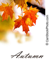 Autumn background - Background with open space made with...