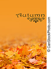 Autumn background