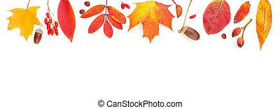 Autumn background border. Vivid fall leaves on white background