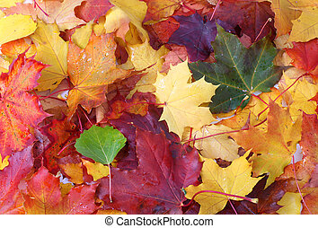 Autumn background. Colorful autumn leaves background.