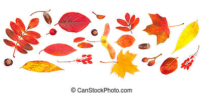 Autumn background. Colorful fall leaves isolated