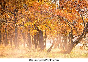 Autumn background. Fall nature.
