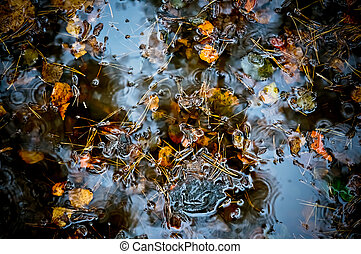 Autumn background from the fallen leaves and fir needles in water
