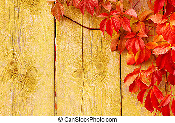 Autumn background: grape red leaves over grunge wooden texture