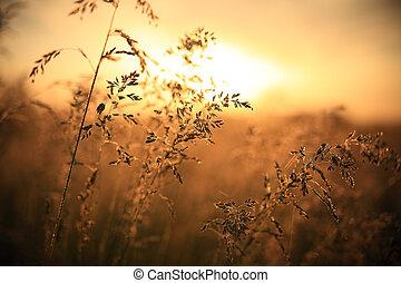 Morning sunlight. Fall nature.