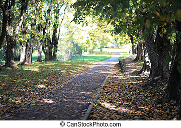 Autumn background in the park