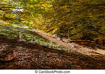Autumn background in woods. Horizontal view of a forest, top-side of a mountain, in a sunny autumn day.