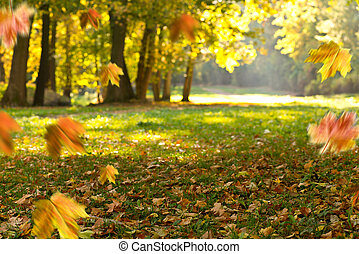 Autumn background. Landscape in the park.