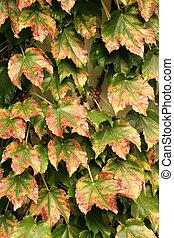 Autumn Background Leaf