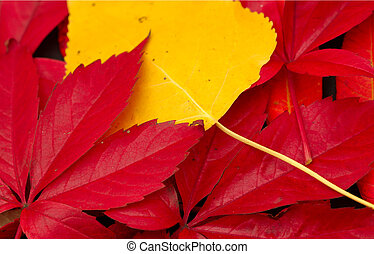 Autumn Background - mixed leaves