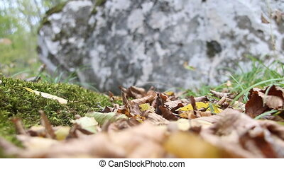 Autumn background, moss and stone