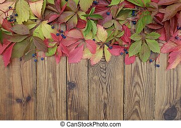 Autumn background of bright leaves of wild grapes on a wooden boards with copy space.