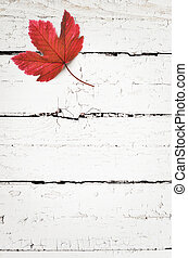 Autumn background of fall leaves on the wooden board, top view