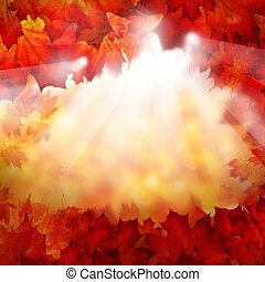Autumn Background of Fall Maple Leaves. Autumn Border with Sunlight