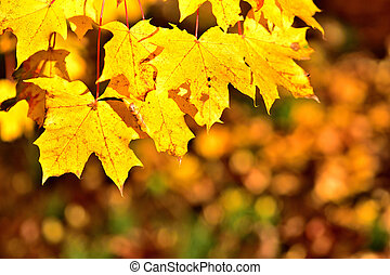 Autumn background of golden leaves. Close-up detail.