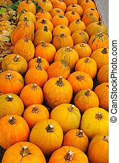 Autumn background of yellow pumpkins