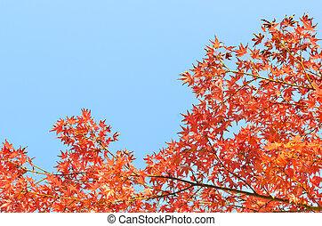 Autumn background over blue sky