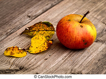 red apple with tree yellow leaves