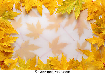 Autumn background with a frame of yellow maple leaves