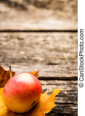 Autumn background with apple on leaf