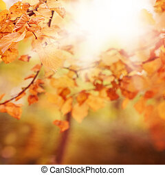 Autumn Background with Blurred Fall Golden Leaves and Bokeh Light